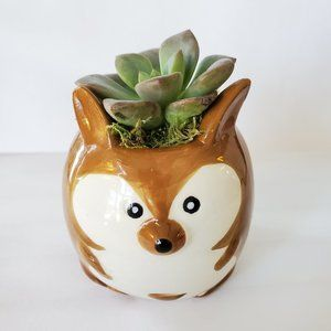 Other - Kangaroo Planter with Live Succulent 2""